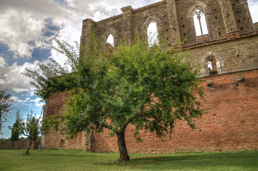 Tree and a Ruin