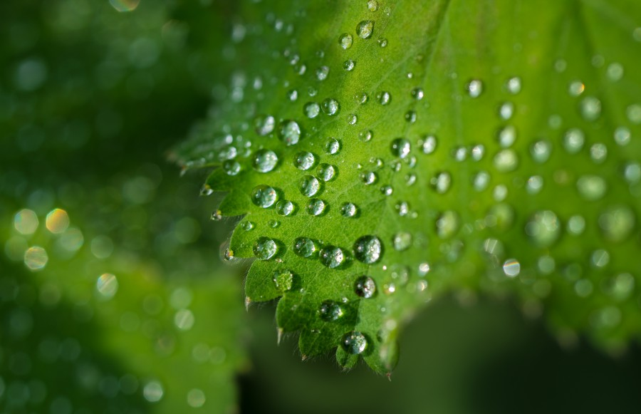 Water drops on leafs