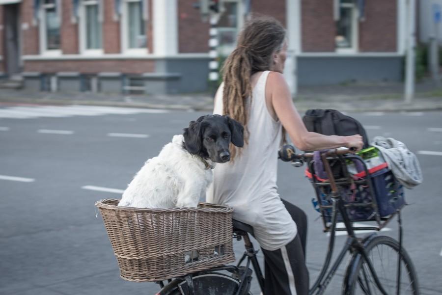 Dutch way to travel