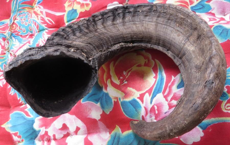 snaky shofar