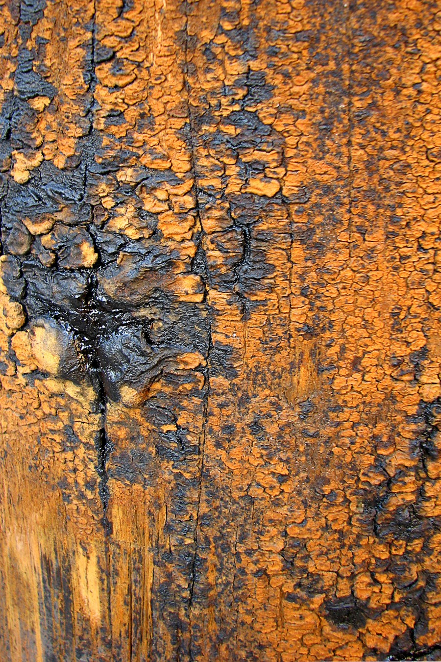 gray and orange bark