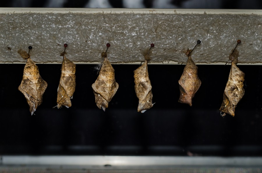 Hanging cocoons