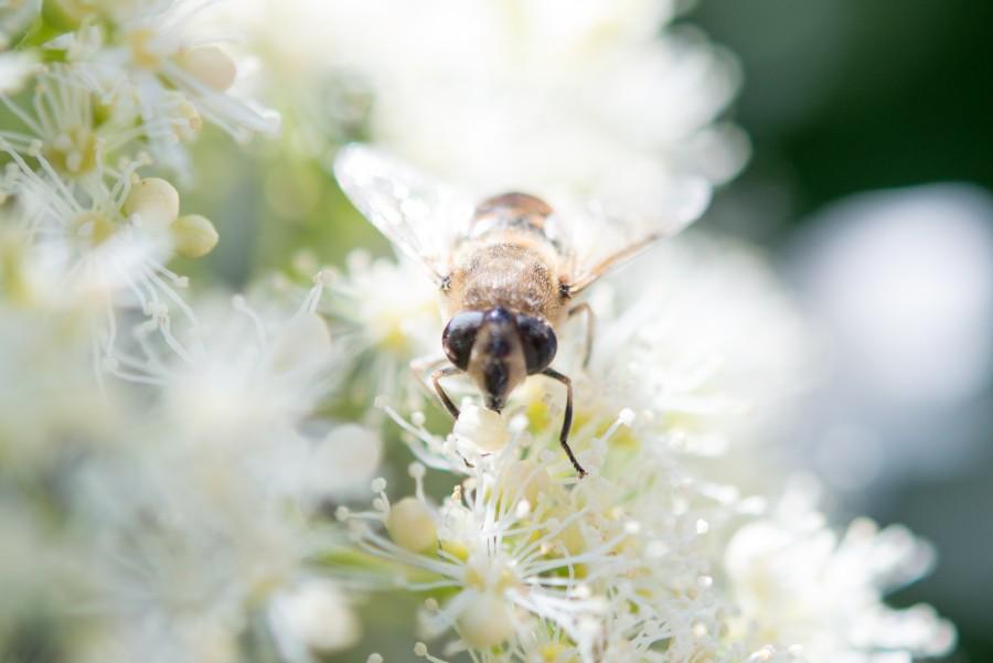 Let it bee!
