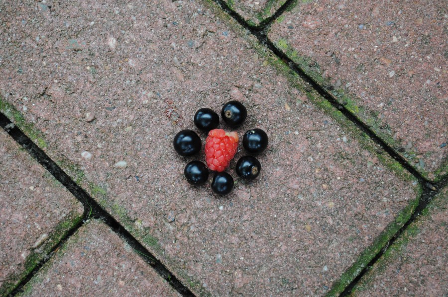 Raspberry and blackberries