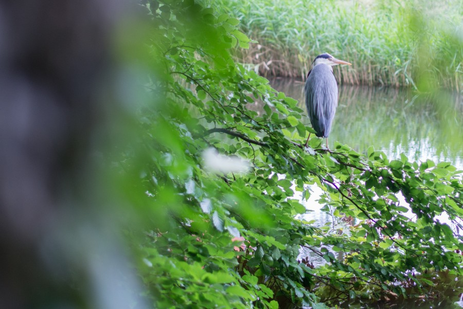 Heron on the watch