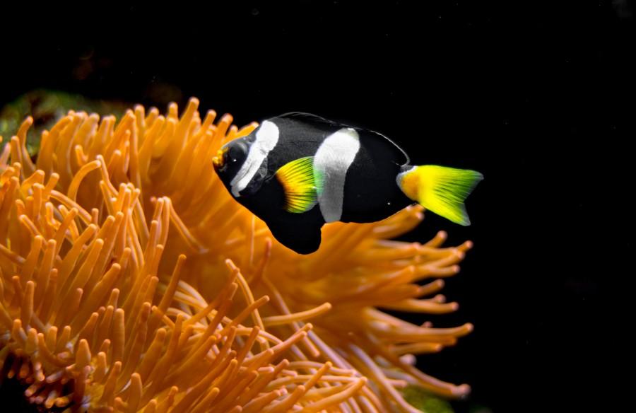 Little aquarium fish