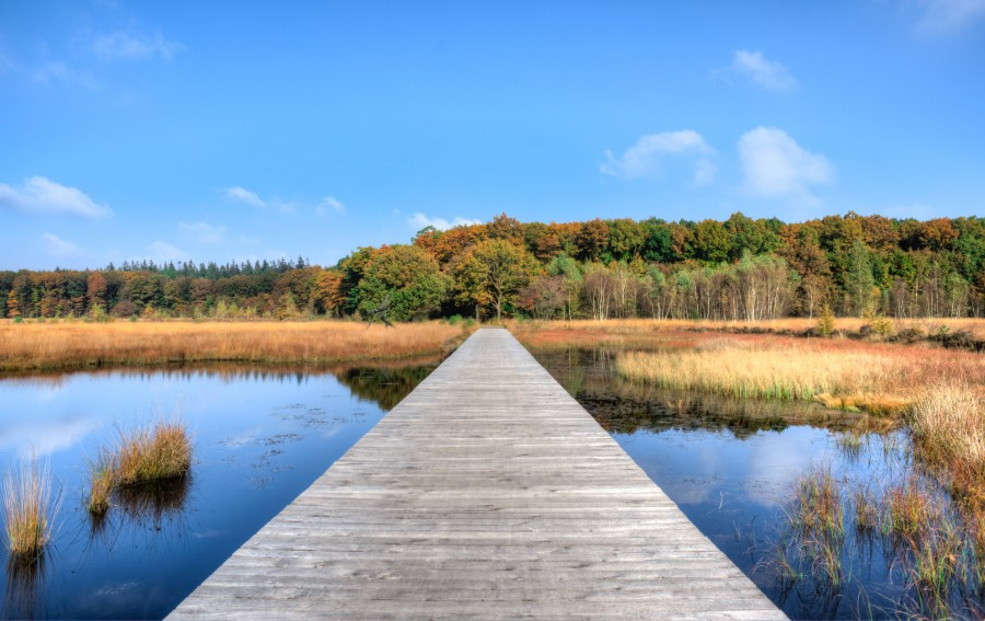 Fall in Drenthe