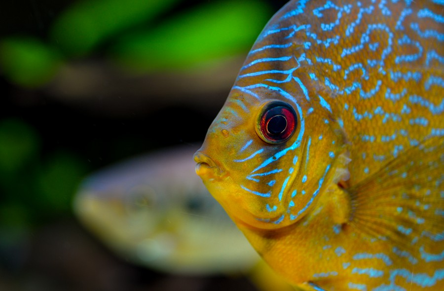 Tropical fish eye