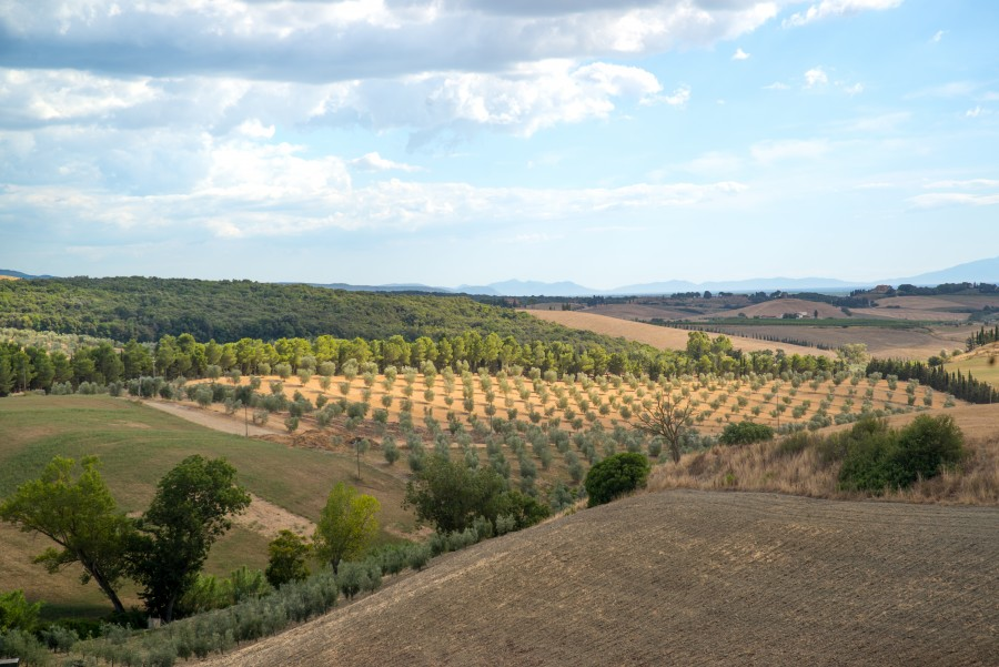 Tuscan patchwork