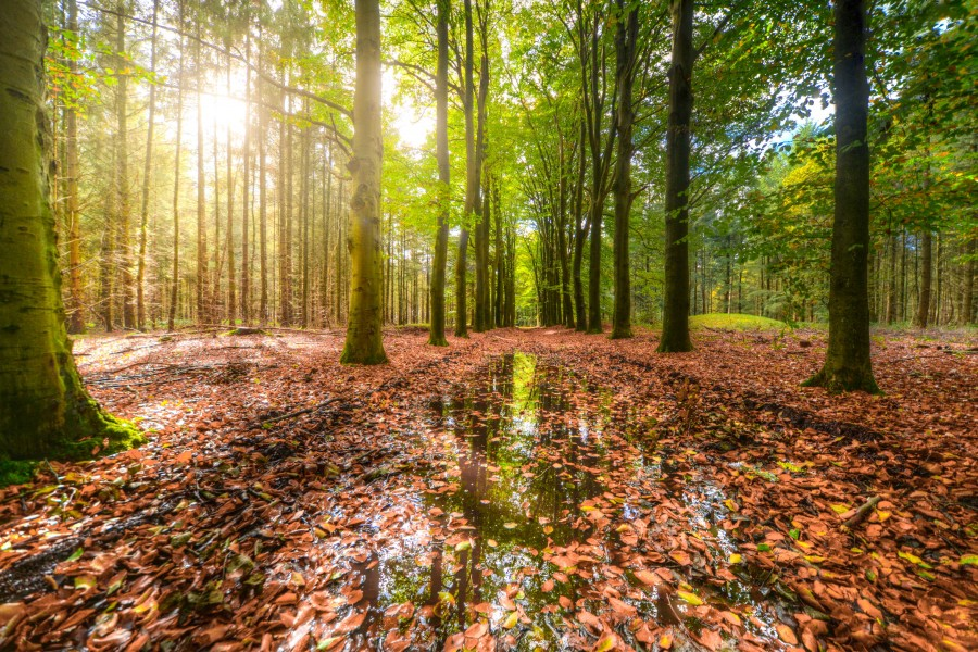 Forest after rain