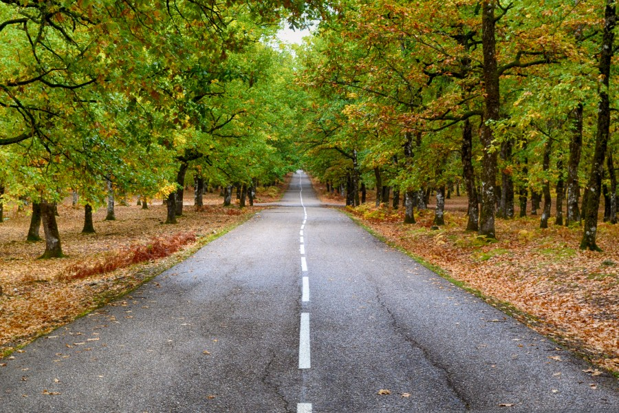 Road lying ahead in the Forest Greece