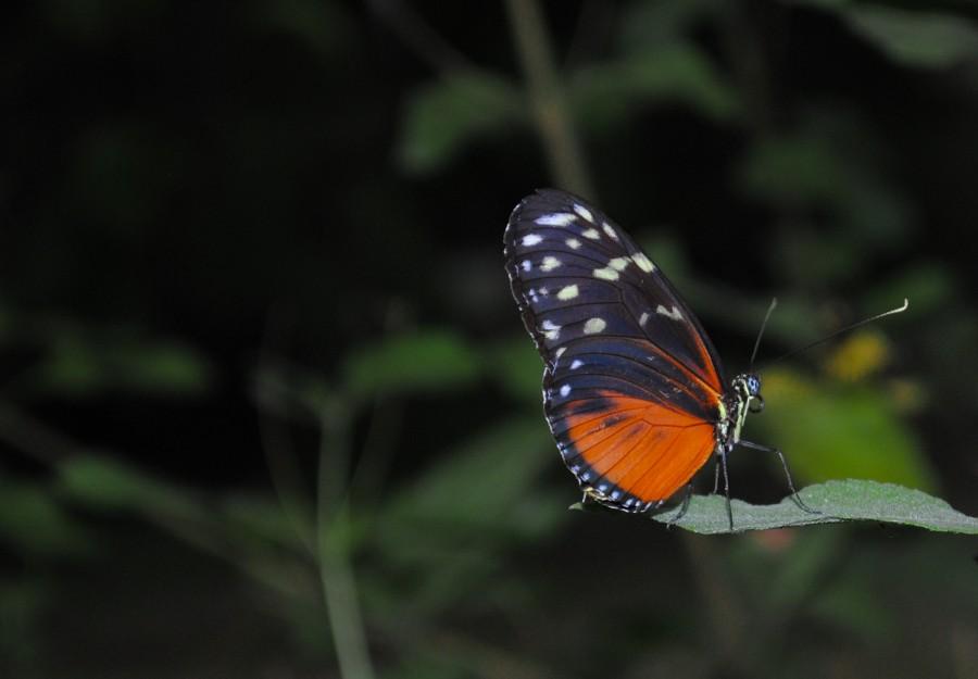 Orange butterfly sitting on a leaf