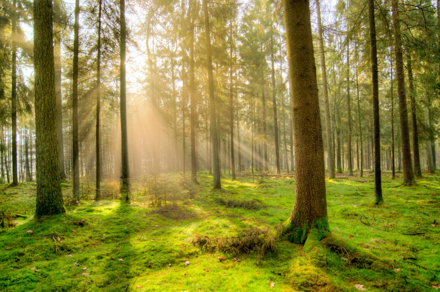 Forest in the early morning