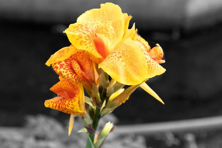 Yellow flower on skitterphoto yellow flower on skitterphoto mightylinksfo