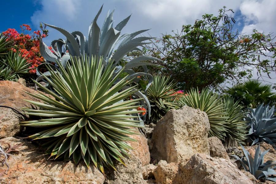 Rock plants