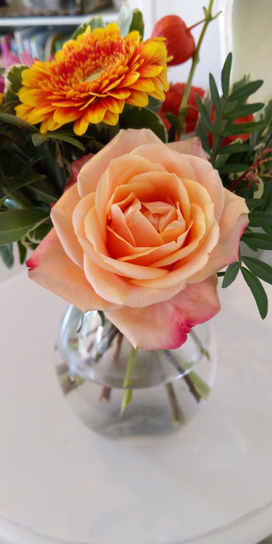 Orange rose in vase