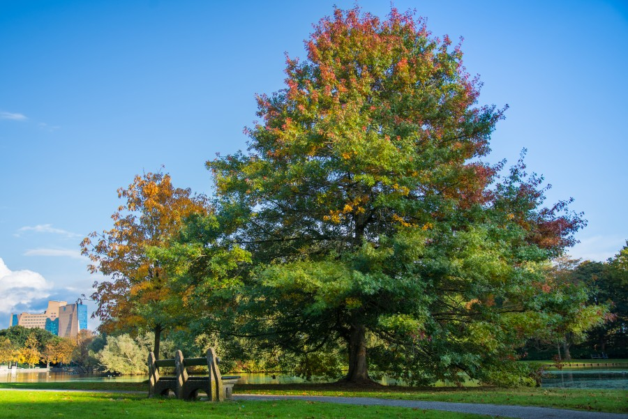 Autumn tree in the park