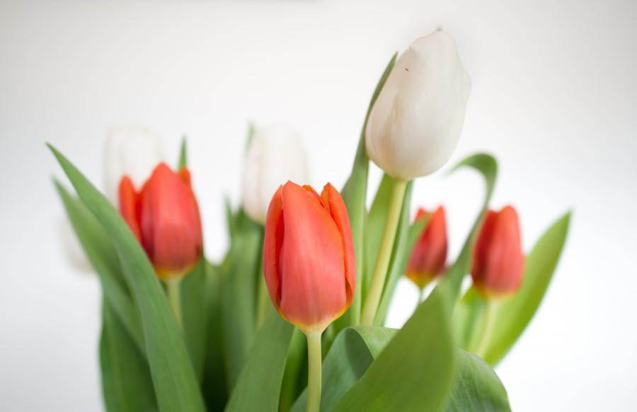 Tulips on a vase