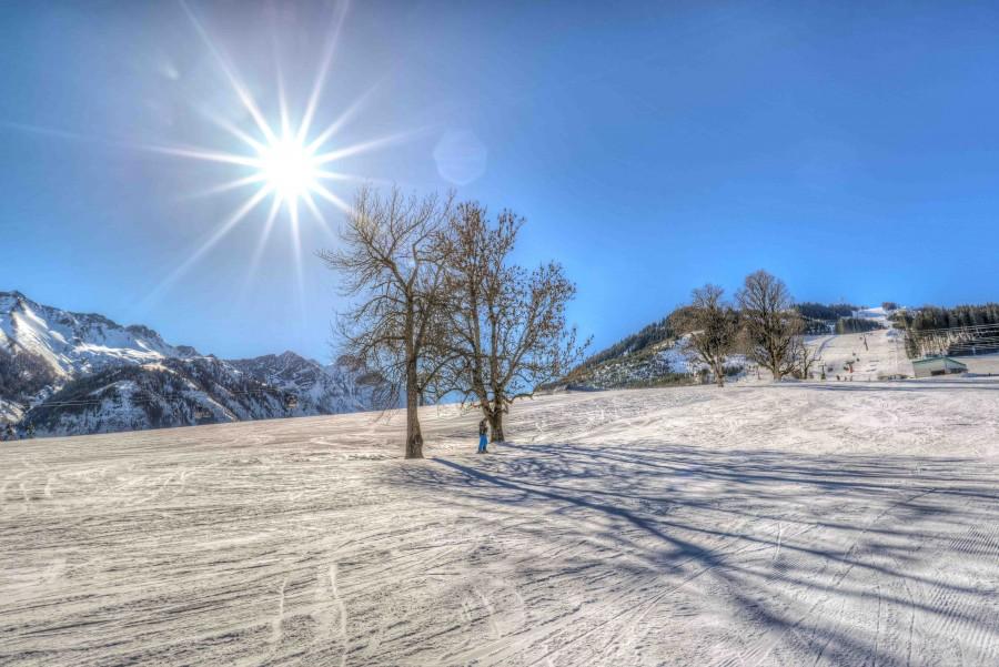 Trees on an alp slope