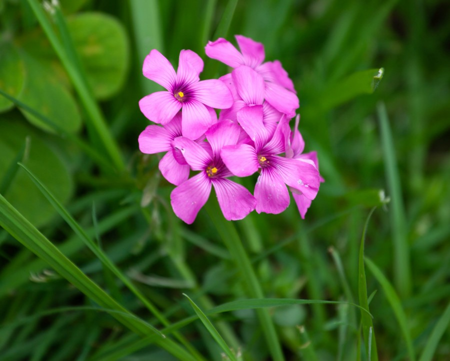 Pink flowers with grass