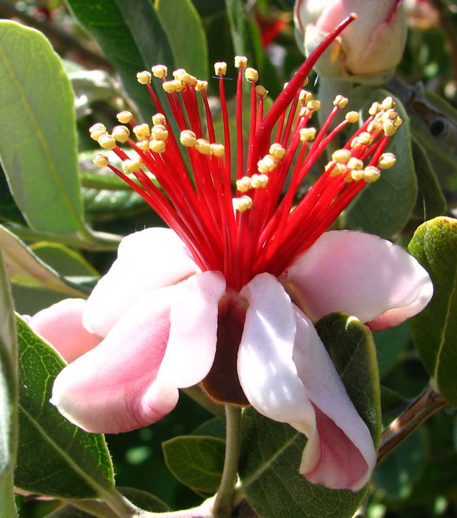 pink flower with red stamens