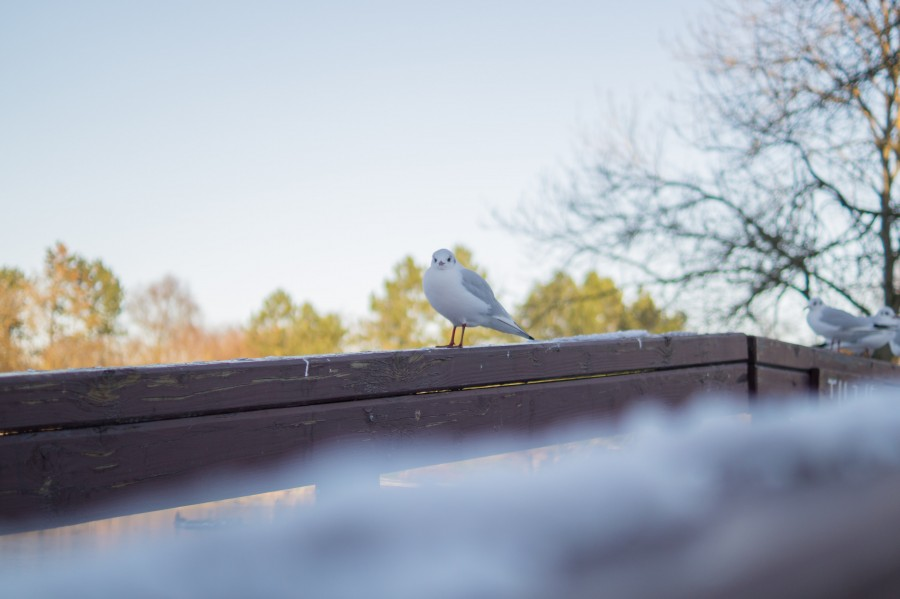 Freezing bird
