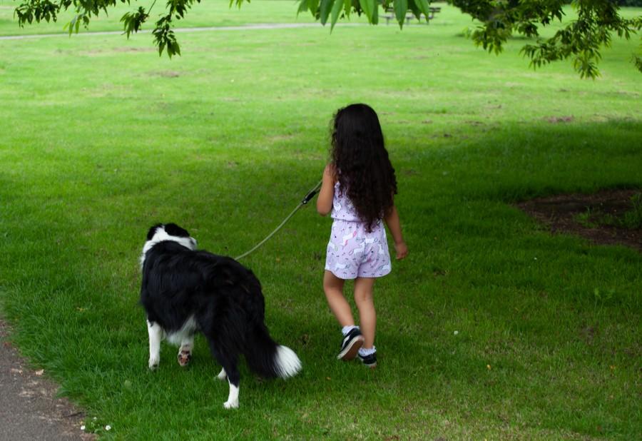 long haired child walking dog