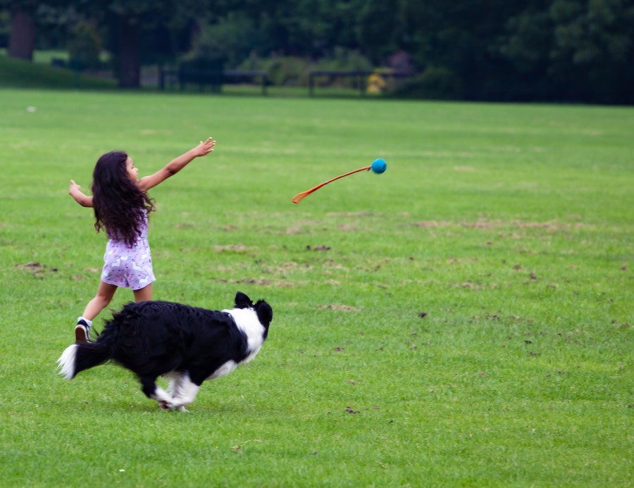 Girl throws ball for black and white dog