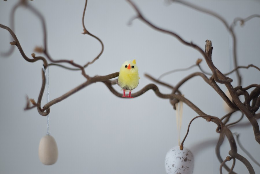 Easter bird on a branch