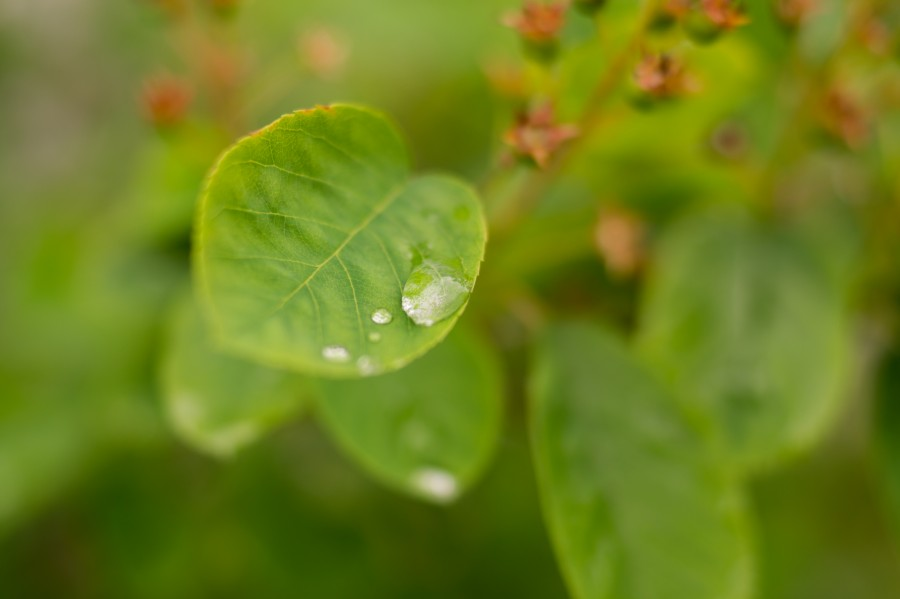 Drop of rain on leaf
